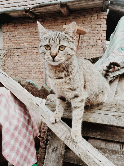 Cats 🐱 Catlover Catportrait Felinefriends Feline, Tomcat, Tom, Kitten, Mouser; Alley Cat; Kitty, Furball; Animal Portrait Close-up Shot