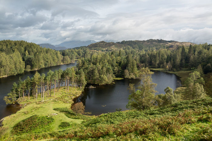 Panoramic view over Tarn Hows in the English Lake District Lake District Lake District National Park Lakeland Panorama Beauty In Nature England English Forest Lake Landscape Nature No People Scenics - Nature Tarn Tarn Hows Tranquil Scene Tranquility Water