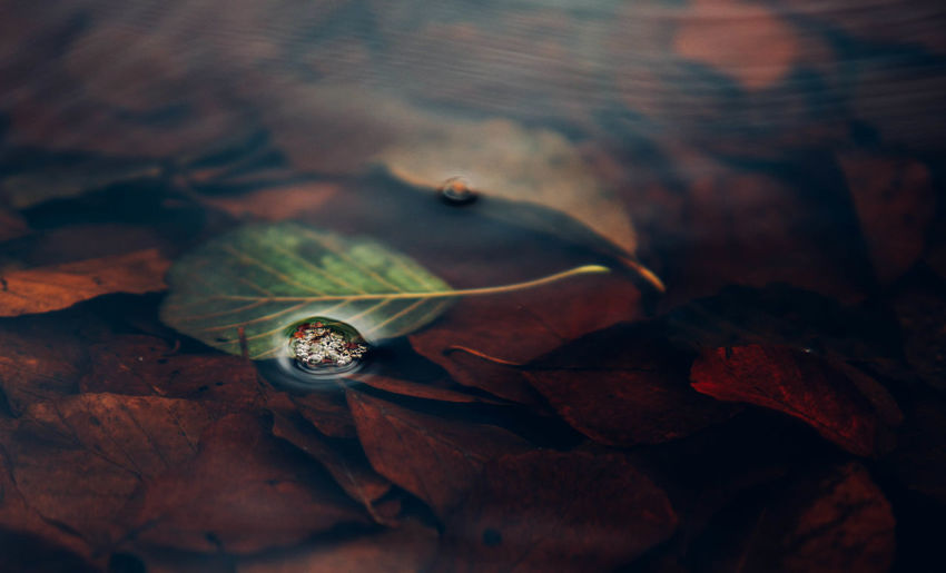 Autumn Autumn Colors Autumn Leaves Day EyeEm Best Shots EyeEm Gallery EyeEm Nature Lover Indoors  Kaszuby Leaf Macro Nature Nature Nature Photography Nature_collection Naturelovers Nikon No People Poland Poland 💗 The Week Of Eyeem Water Water Reflections Waterfront Wejherowo