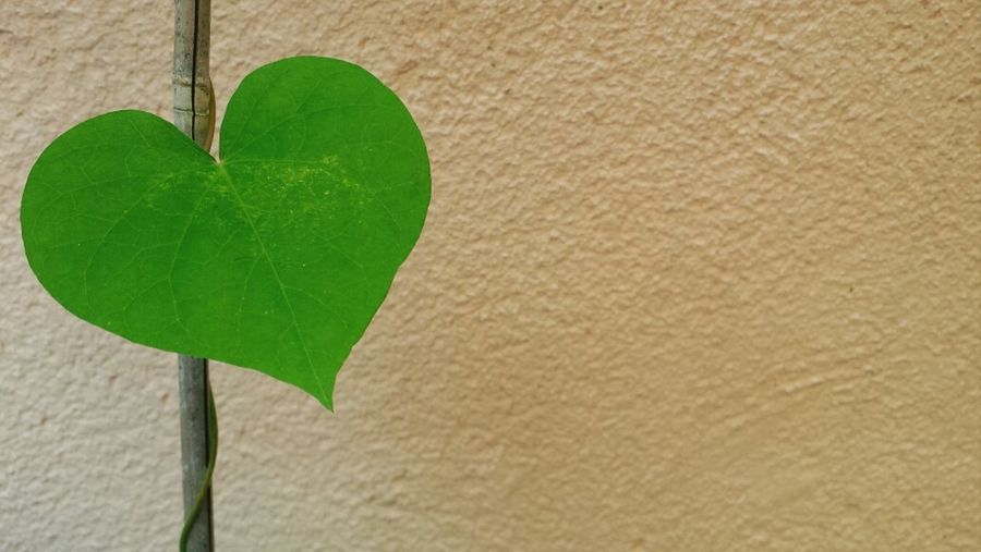 Heart Love Leaf Nature