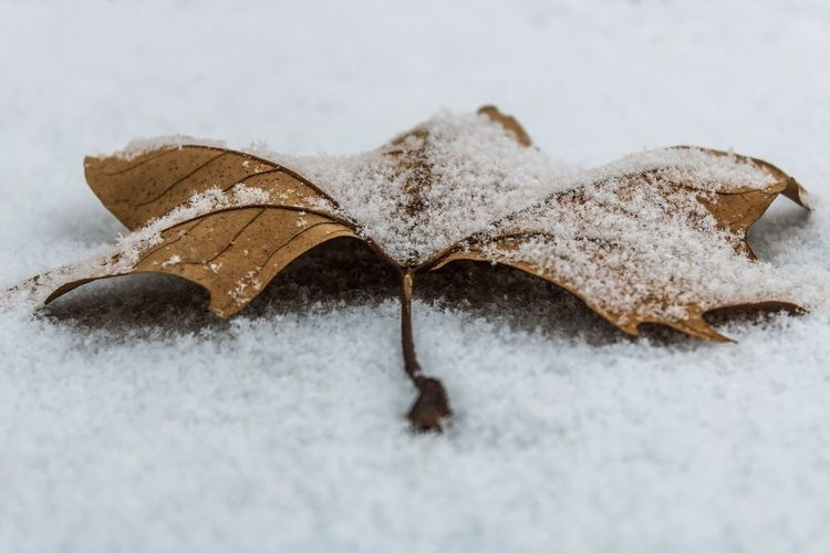 High angle view of dry leaf on snow