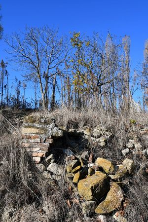 Autumn Damaged Outdoor Nature Old Wall Langhe Ruined Wall Brick Wall Sky Day Sunlight Outdoors Nature No People Blue Clear Sky Low Angle View Tree Beauty In Nature Close-up