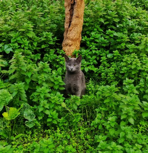 Tree Leaf Branch Squirrel Raccoon Hanging Animal Themes Plant Green Color Cat Kitten Domestic Cat Stray Animal Feline