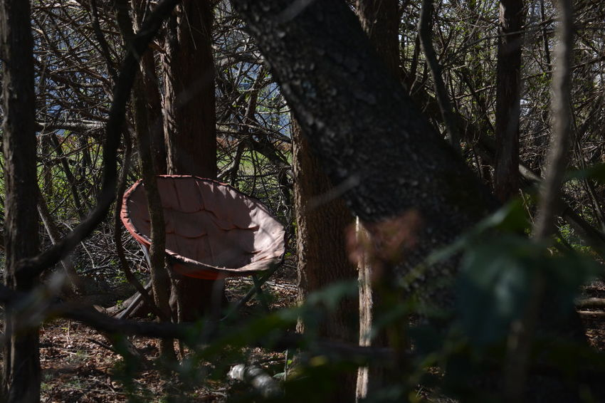 Beauty In Nature Branch Camping Chair Day Discovering Exploring Forest Nature No People Outdoors Relax Tranquility Tranquility Tree Tree Area Tree Trunk