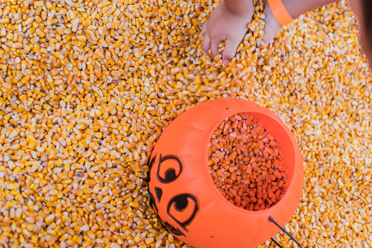 Close-up of jack o' lantern filled with corn