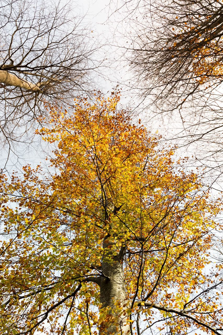 tree, autumn, branch, low angle view, nature, beauty in nature, no people, day, change, outdoors, growth, leaf, tranquility, sky, freshness