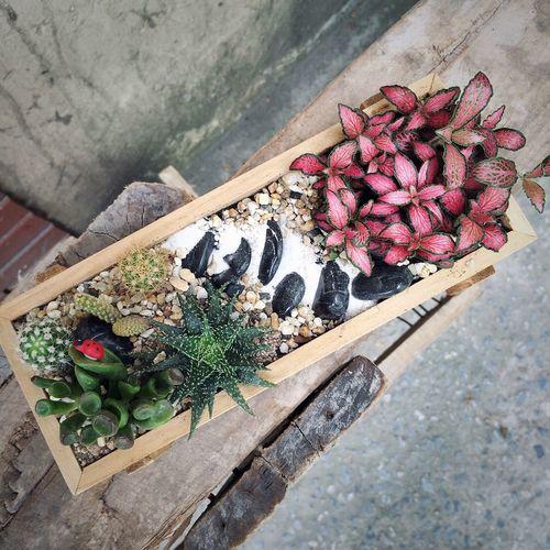 Mini garden in