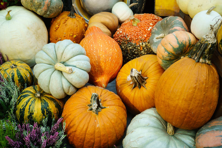 Various type of pumpkin Autumn Close-up Day Food Freshness Gourd Halloween Market Multi Colored Nature No People Orange Color Outdoors Pumpkin Squash - Vegetable Vegetable