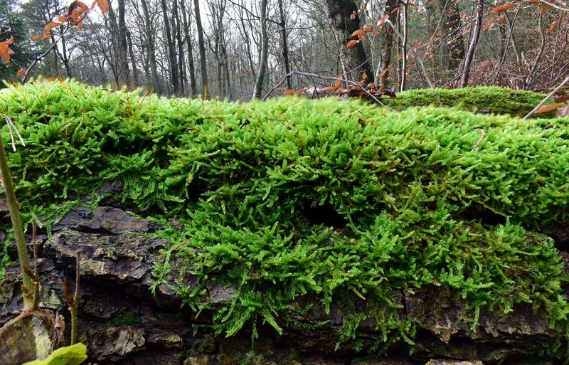 mossy patch on
