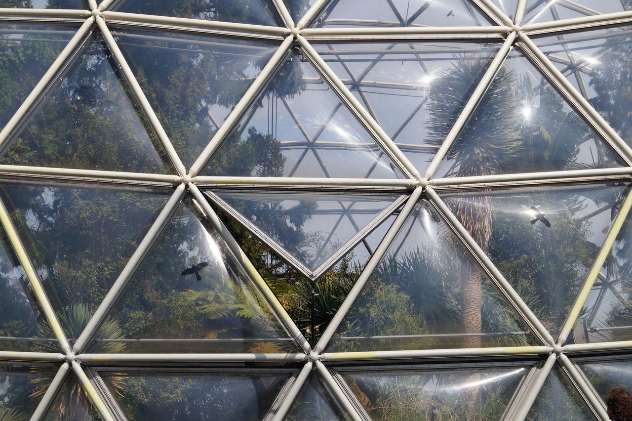 Full frame shot of glass window on greenhouse