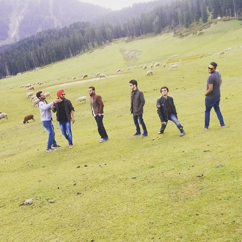 Bedifferent Brostuff Doodhpathri Kashmir Sheeps Epic Weirdos