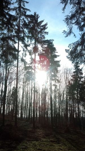 Sunshine!!*-* Summer Forest My World Picoftheday