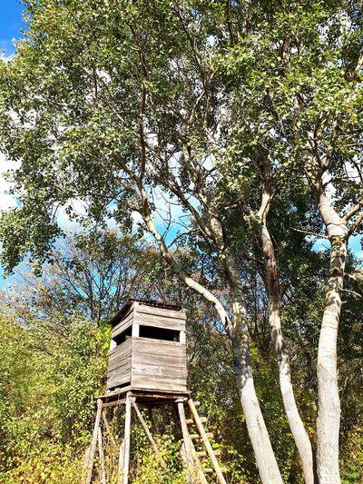 Hunting Ladder Tree Full Frame Sky Directly Below Countryside Green Grassland Woods Growing Detail Upward View Farmland Greenery