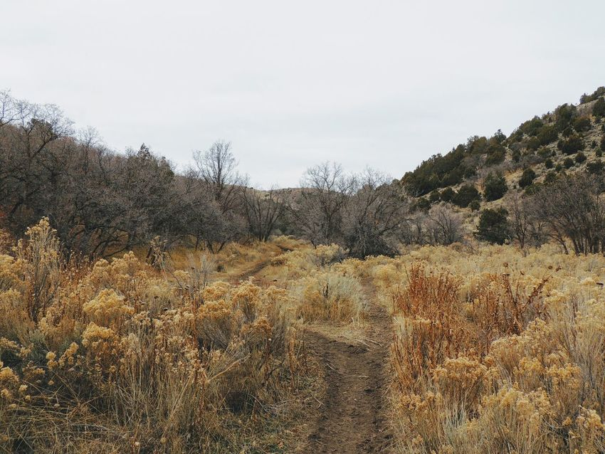 Late Fall panorama forest views hiking, biking, horseback trails through trees on the Yellow Fork and Rose Canyon Trails in Oquirrh Mountains on the Wasatch Front in Salt Lake County Utah USA. Autumn Biking Copy Space Fork Great Basin Hiking Oquirrh Mountains Panorama Wasatch Front Amazing Beauty Canyon Fall Forest Horse Trail Journey Lanscape Maple Mountains Oak Oak Tree Peaceful Stream Trail Zen