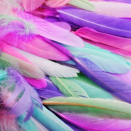 Full frame shot of multi colored feather
