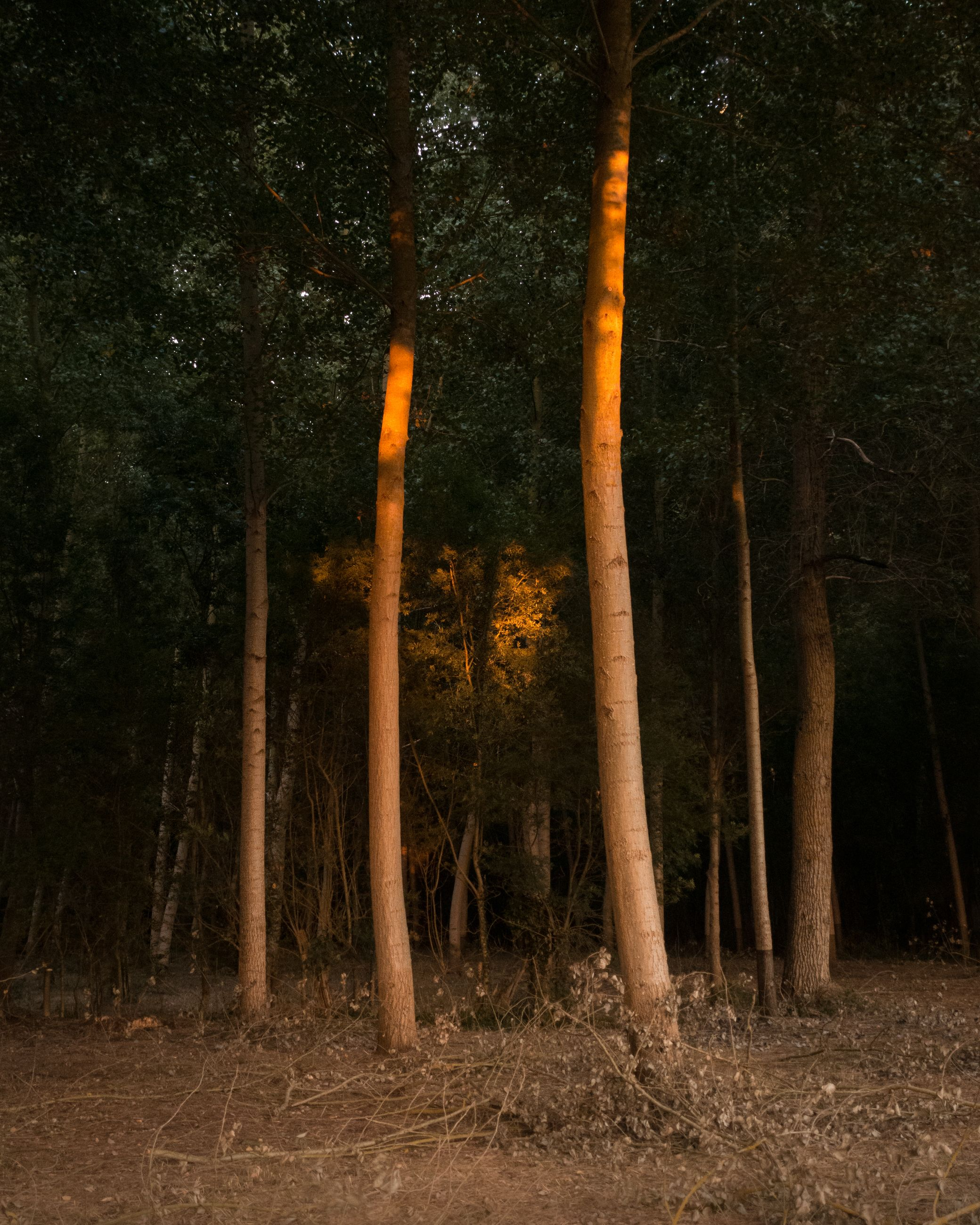 tree, plant, land, forest, trunk, tree trunk, nature, sunlight, natural environment, no people, tranquility, woodland, darkness, beauty in nature, growth, environment, leaf, non-urban scene, landscape, tranquil scene, outdoors, autumn, scenics - nature, light, wood, morning