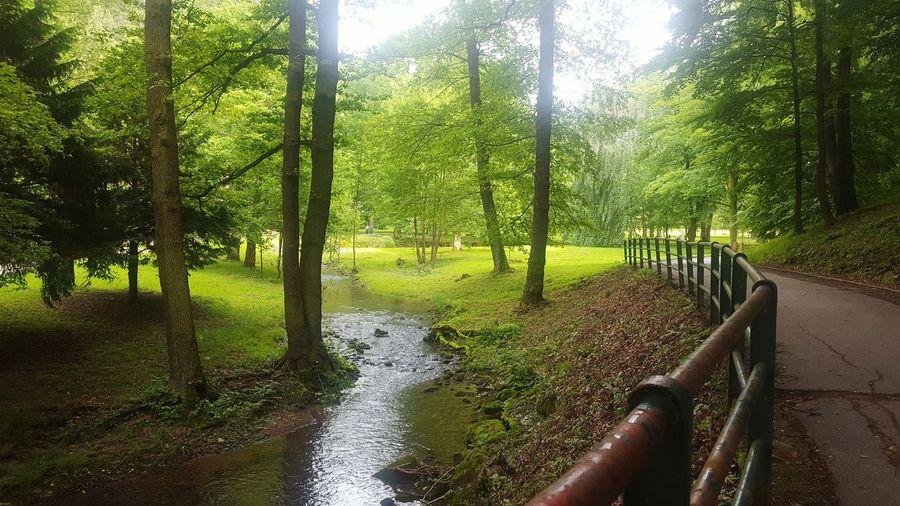 Slovakia Nature Forest Park TrenčianskeTeplice TreePorn Woods Natural Photography
