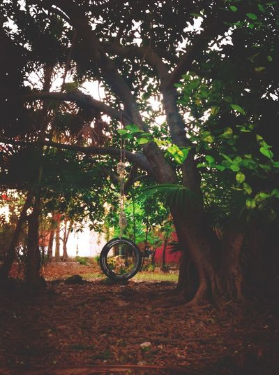 Beauty In Nature Branch Day Flora Garden Growth Nature No People Outdoors Recycle Recycled Materials Swing Tire Tire Swing Tree Tree Trunk Tyre Tyre Swing Wheel
