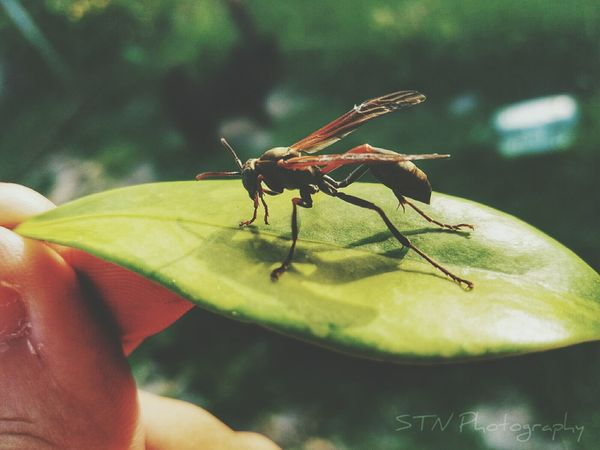 Insect Animal Themes Nature Close-up Leaf Animals In The Wild Animal Wildlife One Animal Plant Outdoors Beauty In Nature No People Day Treetop Milky Way First Eyeem Photo Horizon Over Water Water Galaxy Scenics Star - Space Illuminated Astronomy Storm Cloud Tranquil Scene