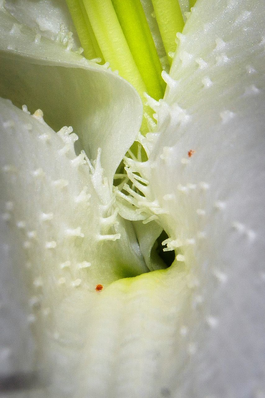 vegetable, freshness, food and drink, close-up, full frame, food, no people, healthy eating, growth, green color, leaf, nature, day, flower, indoors, flower head