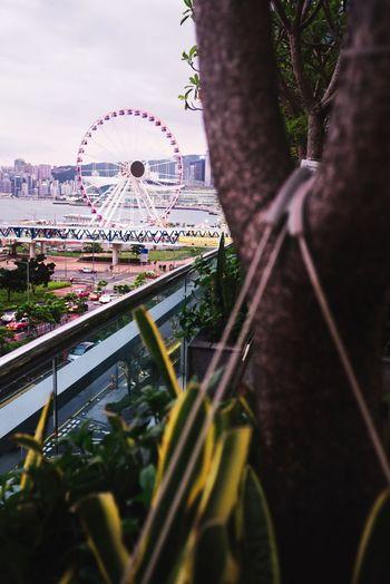 Amusement Park Amusement Park Ride Ferris Wheel Arts Culture And Entertainment Tree Architecture Built Structure