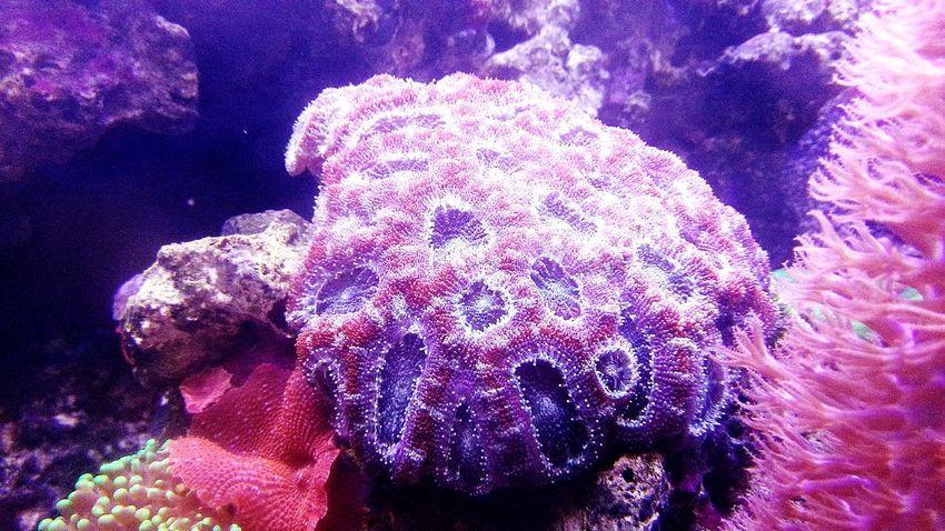 Marine Aquarium Coral Live Rock
