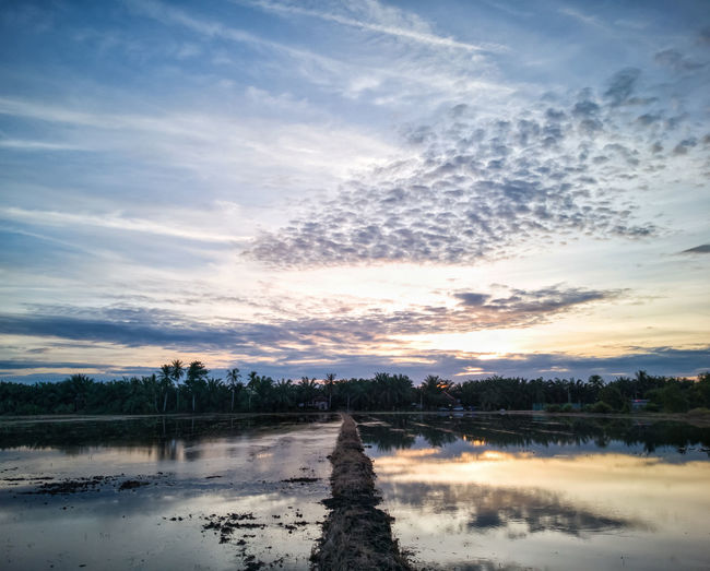 Scenic view of empty paddy field with its devider against the sky arter rain at dusk. Tree Water Sunset Lake Reflection Multi Colored Sky Landscape Cloud - Sky Reflecting Pool Reflection Lake Sky Only