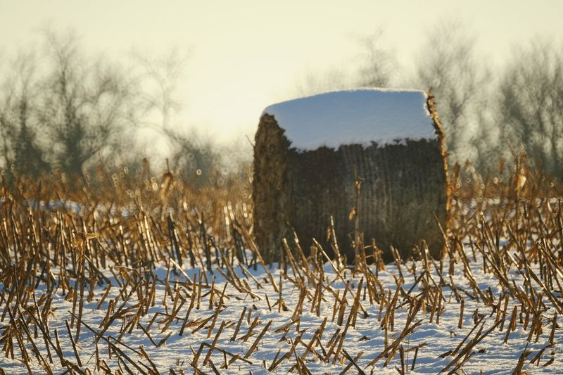 Visual Journal December 2016 Western, Nebraska (Fujifilm Xt1,Nikkor 500mm f8) edited with Google Photos. A Day In The Life Beauty In Nature Camera Work Cold Temperature Eye For Photography EyeEm Best Shots Fieldscape FUJIFILM X-T1 Great Plains Haybales  Landscape Manual Focus MidWest My Neighborhood Nikkor 500mm F8 No People Outdoors Photo Diary Rural America Small Town Stories Snow Storytelling Visual Journal Winter Wintertime