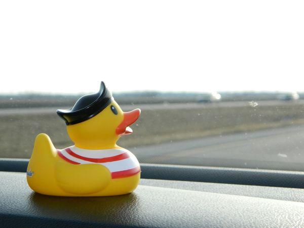Ducky road trip! Shootermag EyeEm Eye4photography  EyeEm Best Shots EyeEm Gallery Road Trip