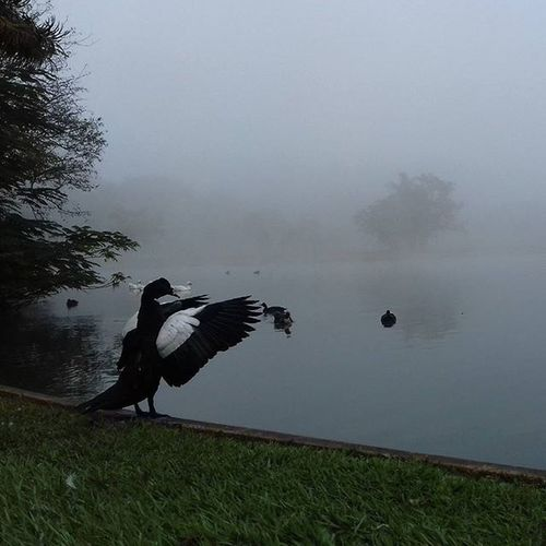 Esalq Frio Coldday Piracicaba Fog Neblina Duck Pato Lago Lake