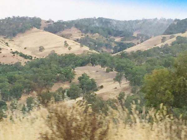 Beautiful South Australia Hills Light And Dark Brown Green Trees Scenery Tranquility Peaceful Dryness