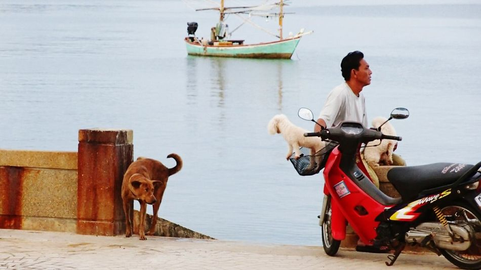 Troublemaker Prachuap Khiri Khan Thailand See Day Wanderlust Dogs Life Dog