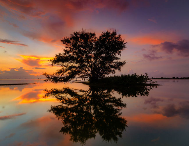 Silhouette tree by lake against romantic sky at sunset