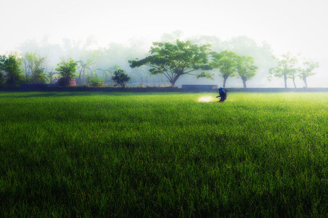Beauty In Nature Day Farm Farm Life Farmer Field Grass Grassy Green Green Color Growth Landscape Lawn Leisure Activity Lifestyles Nature Outdoors Plant Ricefield View Rural Scene Scenics Sky Tranquil Scene Tranquility Tree