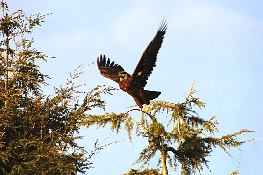 Capturing Movement Canon Eagle Nature Bird Photography Birds Birds_collection