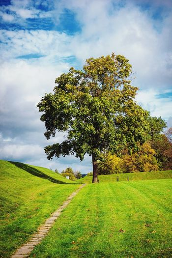 Tree Landscape Beauty In Nature Grass Growth Green Color Nature Single Tree Freshness Way Fayritale Belarus Nature Belarusvillage Autumn Cloud - Sky No People Sky Nesvizh Castle Nesvizh Nesvizhcastle Village Growth Textured  Day Fairy