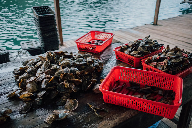 At the oyster farm. Farm Seafood Asian Food Close-up Day High Angle View Nature Nautical Vessel No People Outdoors Oyster  River Shells Water Wood - Material