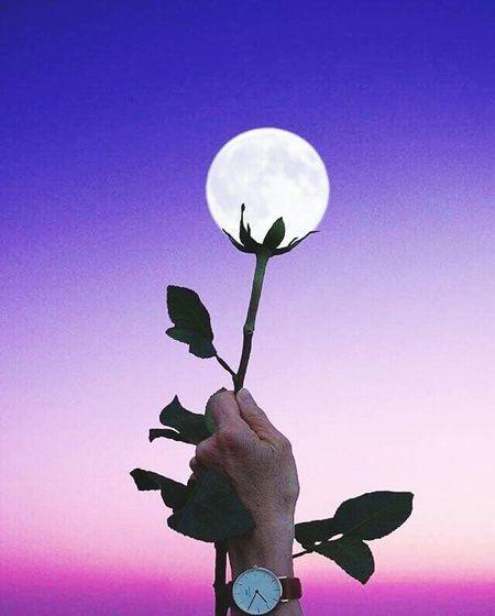Bird Moon Silhouette Space Sky Sculpture Human Representation Female Likeness Sculpted Sculpted Male Likeness Statue Owl Owl Full Moon Planetary Moon Angel Planetary Moon Full Moon Owl EyeEmNewHere Go Higher Inner Power