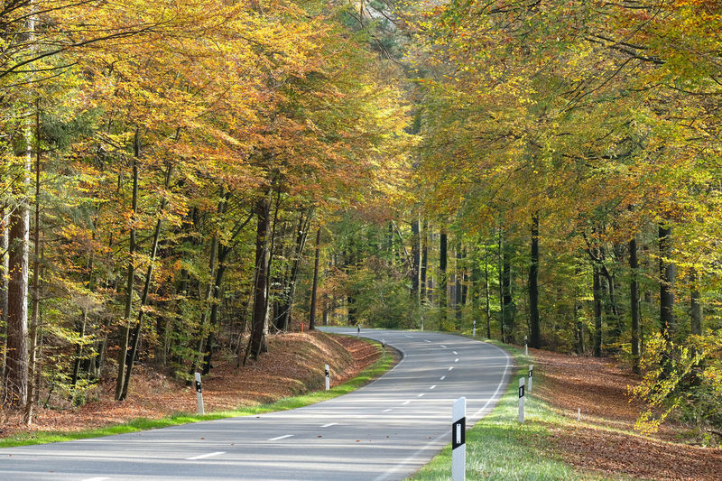 Empty germsn country road, landstraße, through mixed coniferous forests and autumn background.