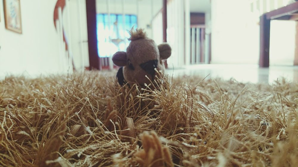 EyeEmNewHere Indoor Indoors  Chimpmunk Brown Color Dog's Toy  Toy XperiaZ5 Xperiaphotography XPERIA BYOPaper! Live For The Story Place Of Heart Sommergefühle EyeEm Selects