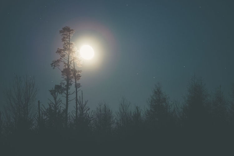 Moon burst. Tree Silhouette Nature Night Beauty In Nature Forest Scenics No People Low Angle View Pine Tree Sky Cold Temperature Outdoors Tree Area Freshness Perspectives On Nature Nature Moonlightscape Moon