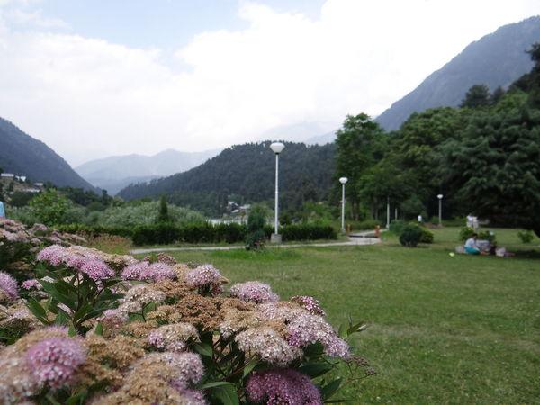 Landscape_Collection Flower Porn Elegance Everywhere pahalgham in kashmir..