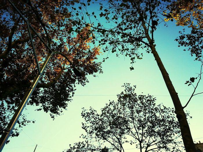 thinking Autumn