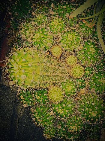 Cactus Bautiful Plants Life Green Color