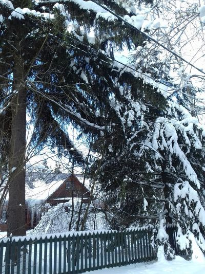 Zhavoronki, Russia, Freezing, Freezing Freezing Cold Freezing ❄ Nature Russia Russia россия Russian Nature Tree TreePorn Trees Zhavoronki Beauty In Nature Cold Temperature Cold Winter ❄⛄ Day Freeze Nature Nature_collection No People Outdoors Snow Tree Tree Area Tree_collection  Winter