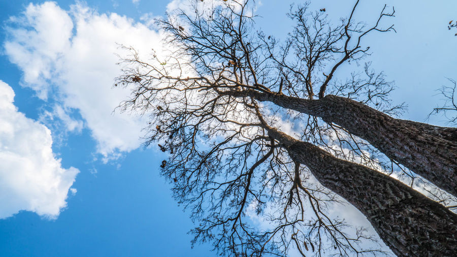 Bare Tree Beauty In Nature Blue Branch Cloud - Sky Day Directly Below Growth Low Angle View Nature No People Outdoors Plant Scenics - Nature Sky Tranquil Scene Tranquility Tree Tree Canopy  Trunk White Color Winter