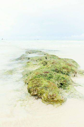 Sand Nature Sea Beach No People Social Issues Green Color Algae Outdoors Close-up EyeEm Ready