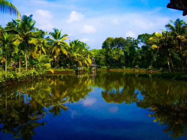 Beauty In Nature Cloud - Sky Day Lake Nature No People Outdoors Palm Tree Reflection Scenics Sky Tranquil Scene Tranquility Tree Water Waterfront Sommergefühle 100 Days Of Summer