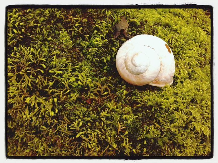 EyeEm Best Shots Civate Nature Verde