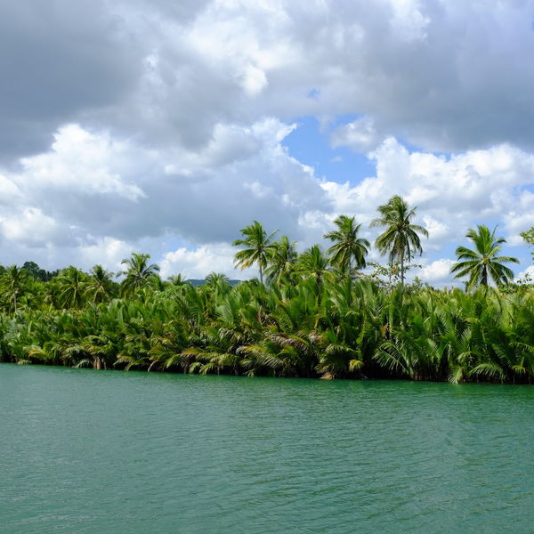Clouds And Trees Coconut Trees Coconut Trees And River Day Green Color Lush Foliage Nature No People